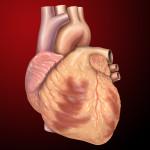 Heart Anterior